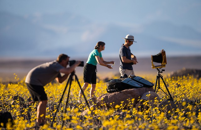No 'superbloom' repeat this year, Death Valley National Park officials say