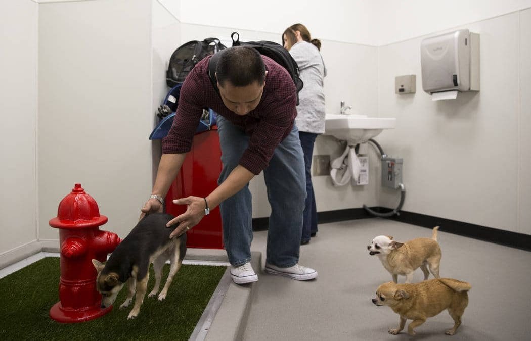 Pets now have place for a potty break at McCarran Airport