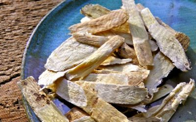 Astragalus Root: Beneficial For Both Health & Beauty