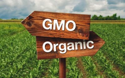 Whole Food's promise to label everything with GMOs by 2018 is quickly approaching