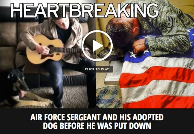 Air Force Sergeant cradles dead military dog draped in US flag after heartbreaking decision to put him down