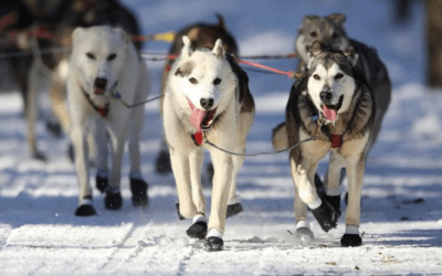 Anchorage cheers dog sled teams in ceremonial start of Alaska's Iditarod