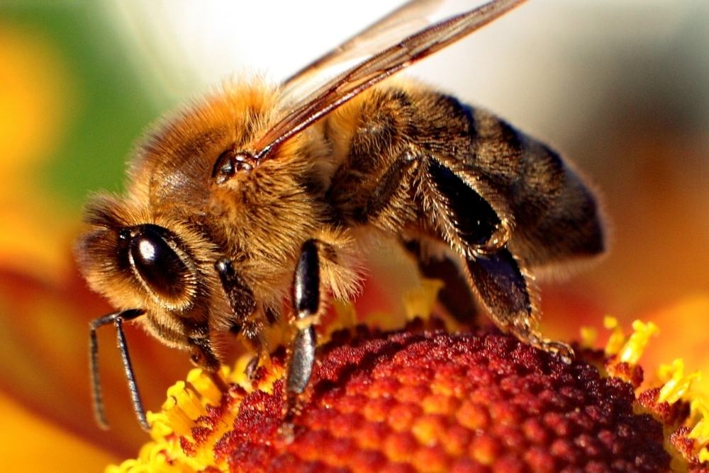 56 percent of Maryland's bees disappeared in 2016 as pollinator collapse accelerates