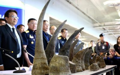 Thailand seizes rhino horns worth $5 million in biggest haul for years