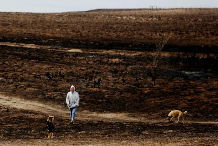 U.S. wildfires ravage ranches in three states