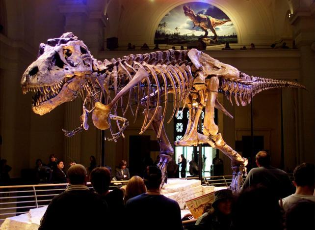 Revolutionary overhaul of dinosaur family tree proposed
