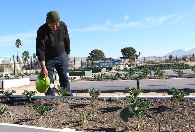 Seeds of hope sprout in North Las Vegas neighborhood