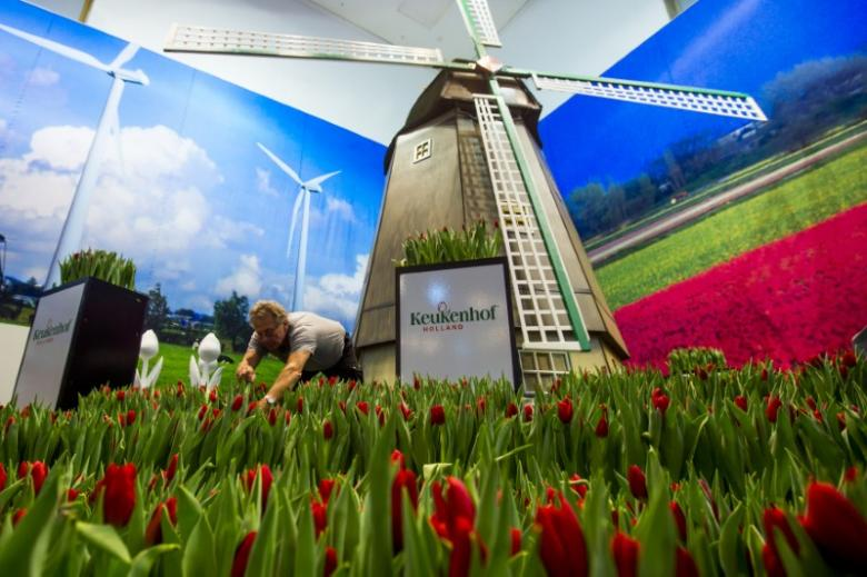 In late April, Dutch tulip bulb farmers chop off the flowers' heads