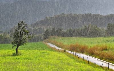 How to effortlessly collect rainwater for your garden this summer