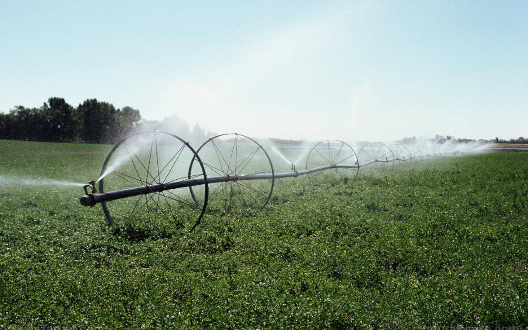 Bee-killing neonicotinoid pesticides are now being found in drinking water