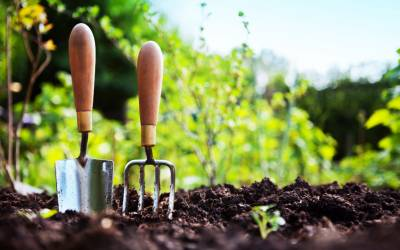 Top 10 homemade natural herbicides to tackle the weeds in your garden