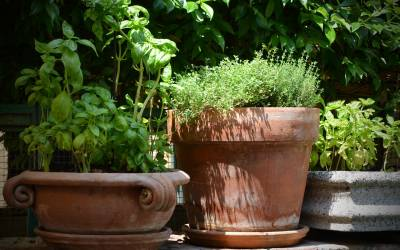 Make time for thyme: How to grow your own thyme