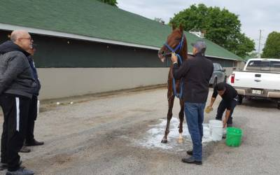 'An Extraordinary Horse': Gunnevera Carrying The Hopes Of A Nation