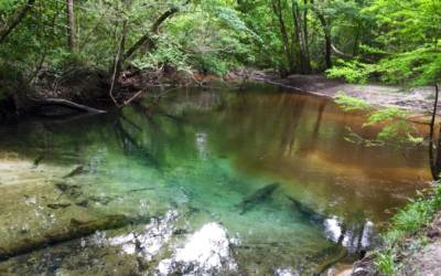 How to easily find a fresh water spring in your state