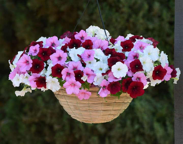 Fashion influences gardening trends for easy, eye-catching flowers