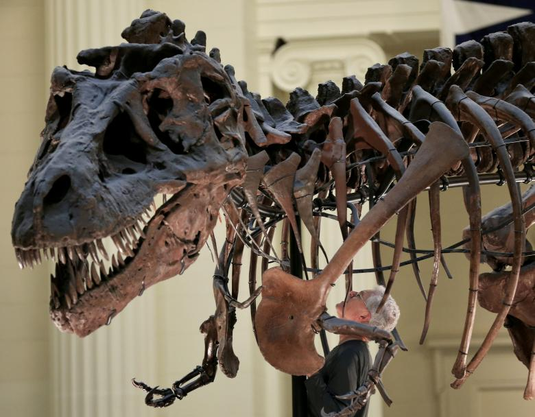 Motor mouth: T. rex could bite with the force of three cars