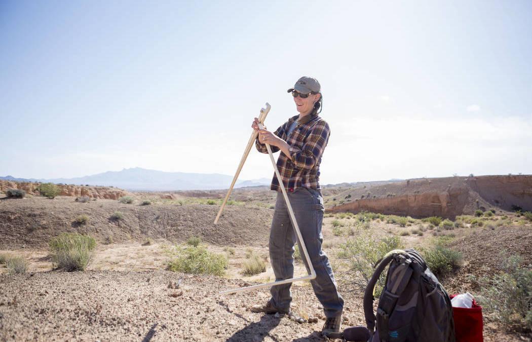 UNLV researcher studies desert's 'living carpet'