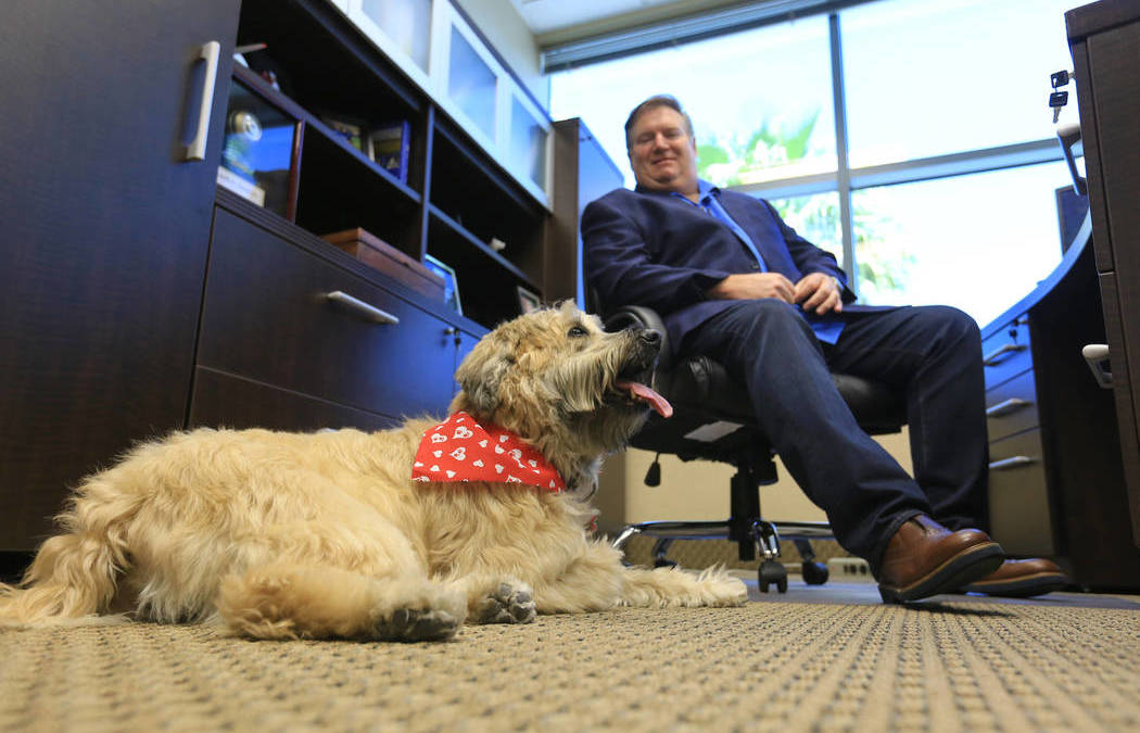 Sadie the dog decides who works for this Las Vegas business
