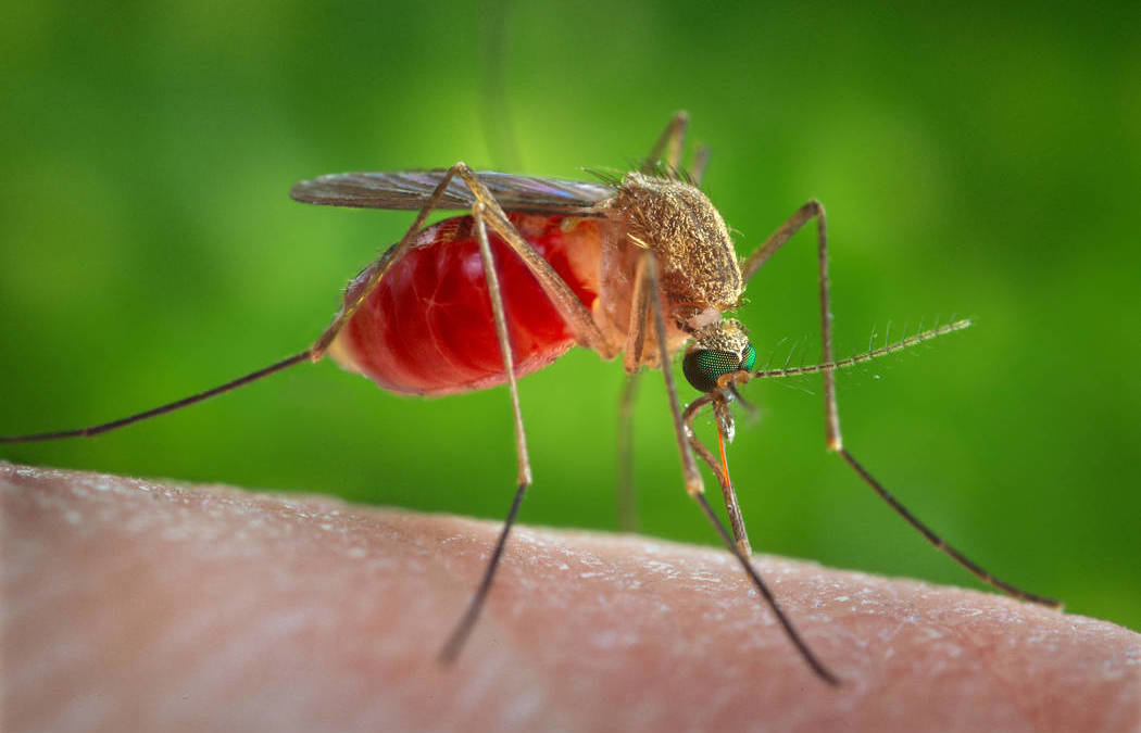 1st human West Nile virus case of 2017 reported in Clark County