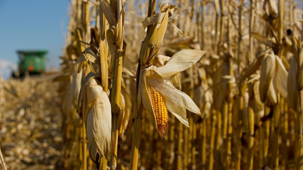 Massive Fraud in Organic Grain Imports Uncovered