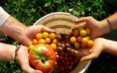 Organic farming explodes 13%… Biggest growth since 2008