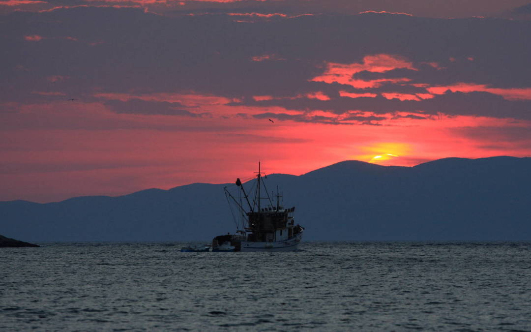 90 percent of the world's fisheries either overfished or fully exploited, new report finds