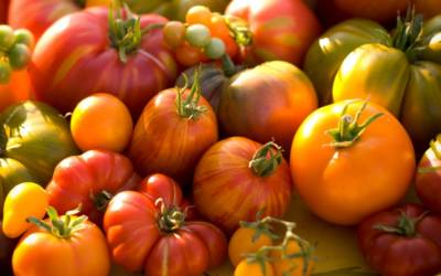 Tomatoes found to halt stomach cancer due to anti-cancer nutrients