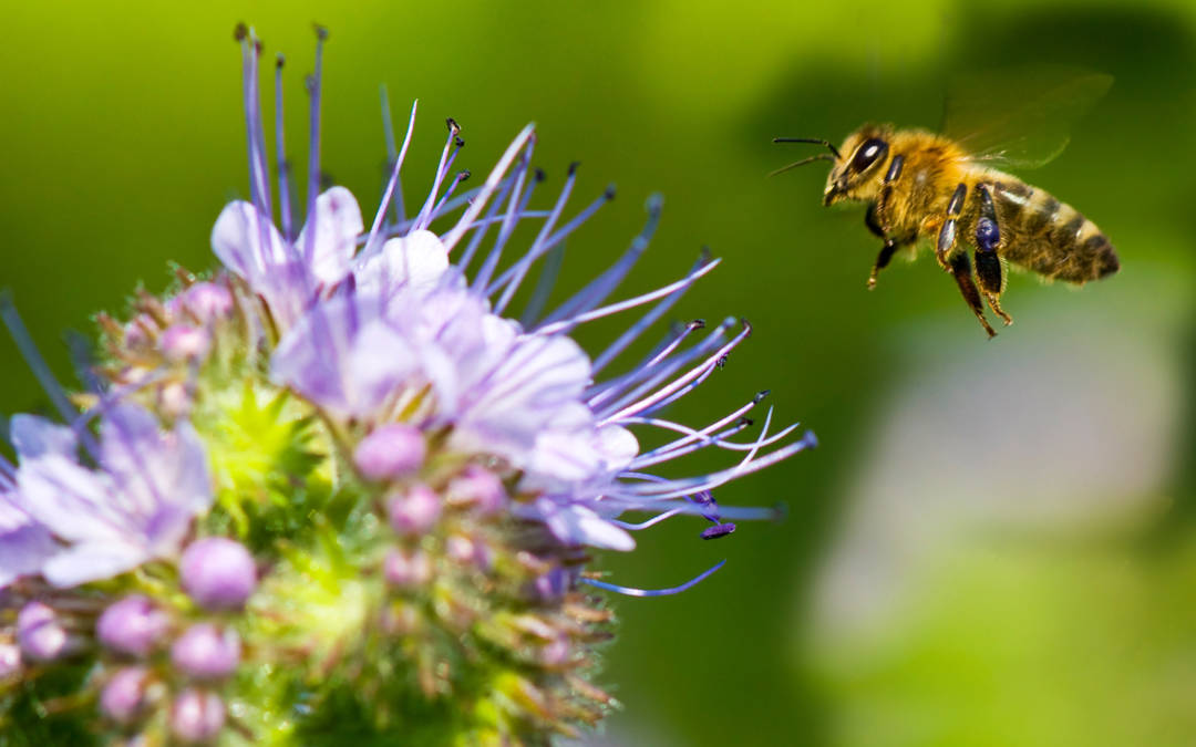 Do your part and save the bees with these 10 easy-to-grow flowers