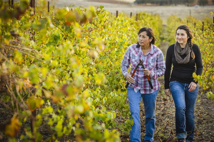 Roots run deep for American growers