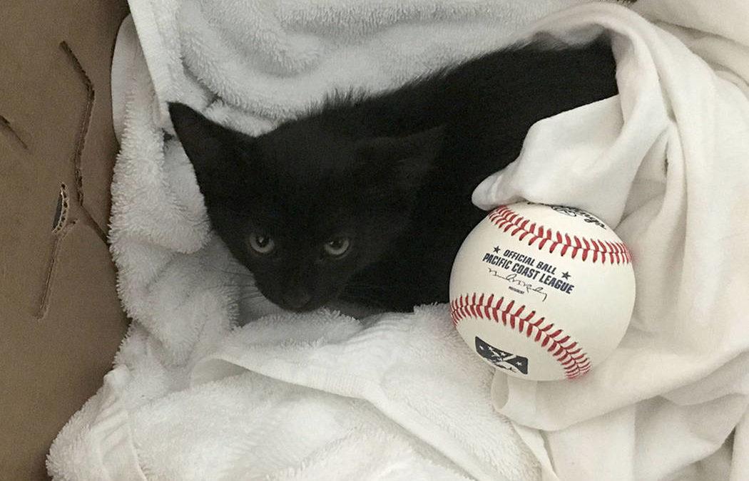 Las Vegas 51s trainer helps Cashman kittens find new homes