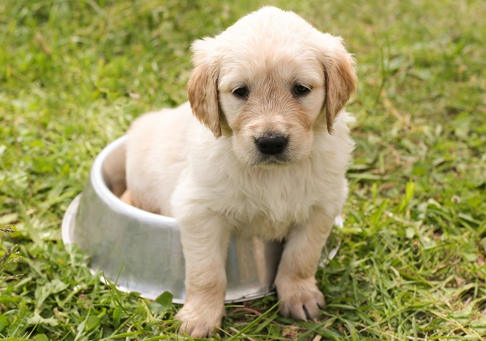31 Incredibly Cute Puppies Who Are Too Cute To Be Real!