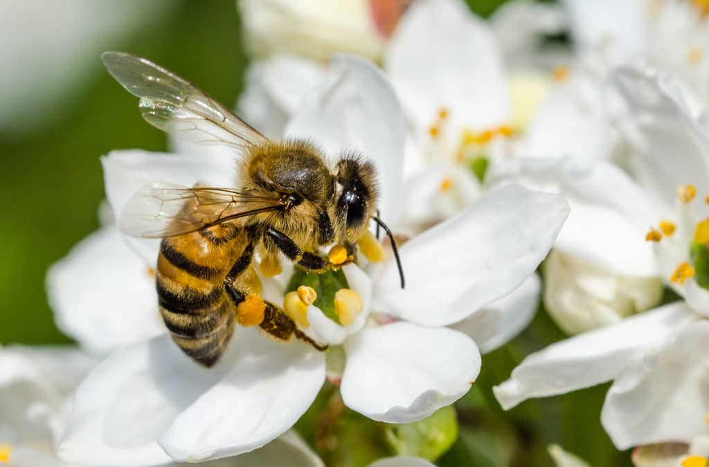 Humanity's chemical SUICIDE confirmed: Pesticides sprayed on food crops are wiping out food pollinators, leading toward a global food collapse
