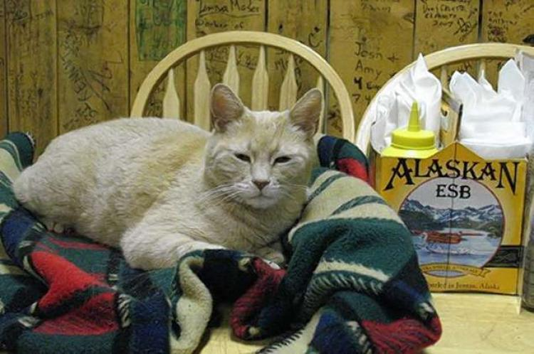 Alaska town's purr-fect unofficial cat mayor dies at 20