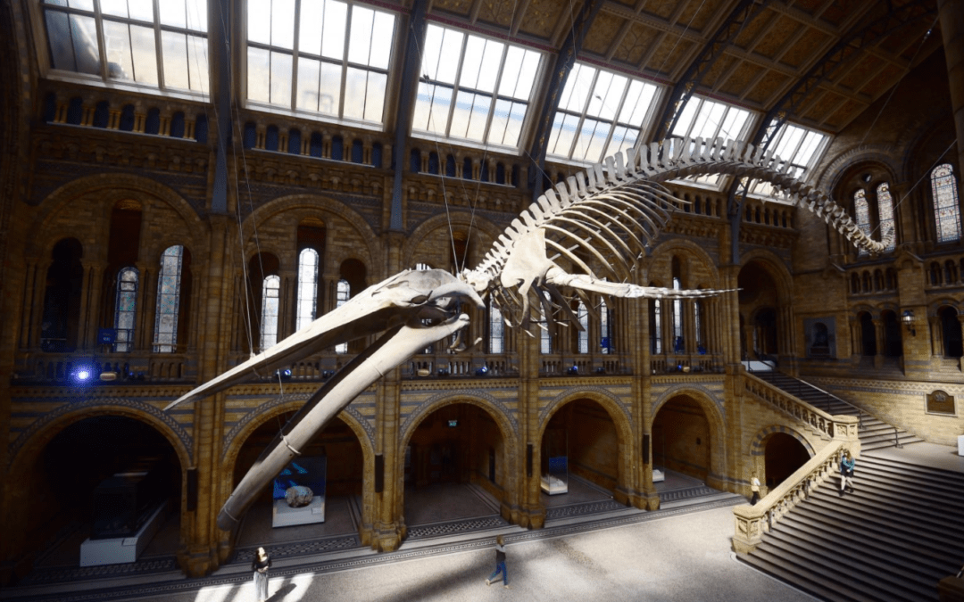 Farewell Dippy the dinosaur – London museum installs whale skeleton