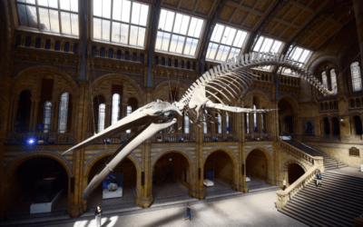 Farewell Dippy the dinosaur – London museum installs whale skeleton