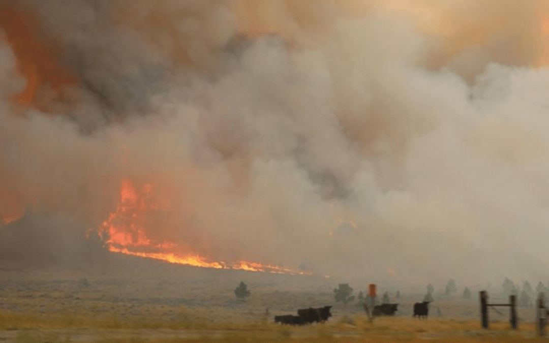 Fire crews battle to halt spread of Montana blaze, largest in the U.S.