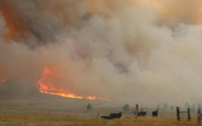 Fire crews battle to halt spread of Montana blaze, largest in the U.S.
