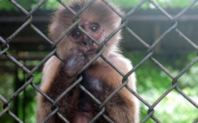 Puerto Rico's economic crisis leaves island's zoo animals malnourished and badly neglected
