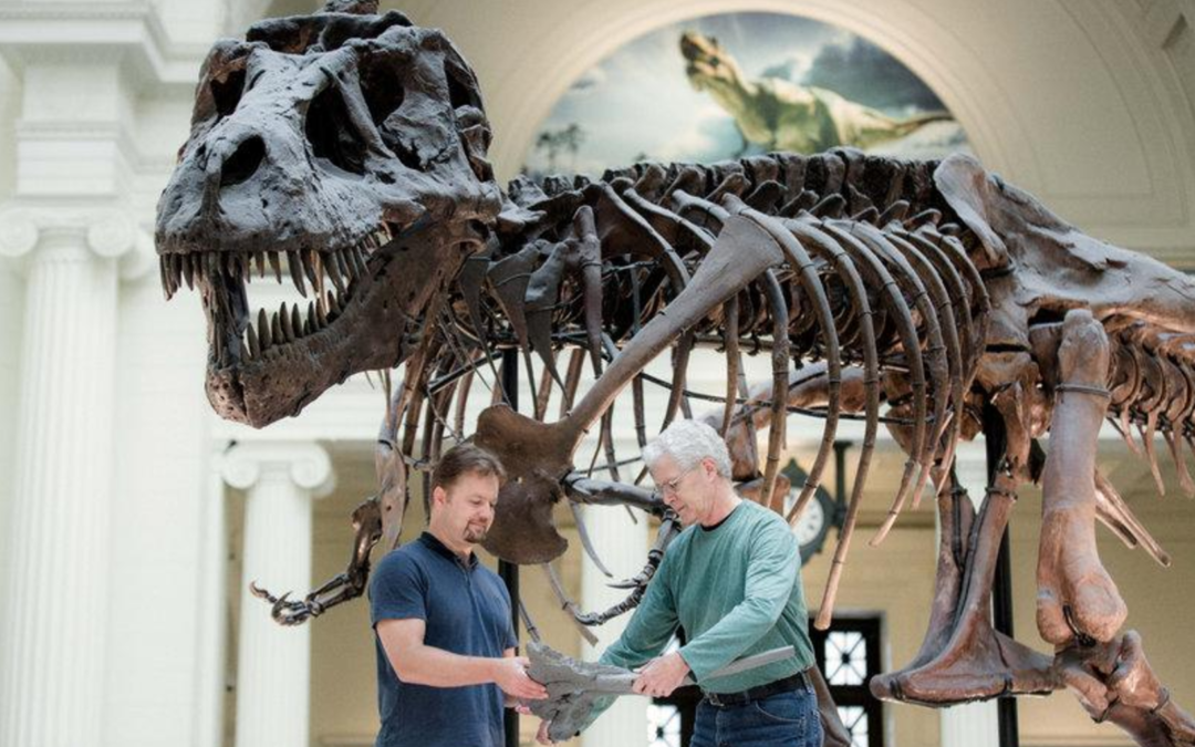 Famed T. rex 'Sue' getting a makeover at Field Museum in Chicago