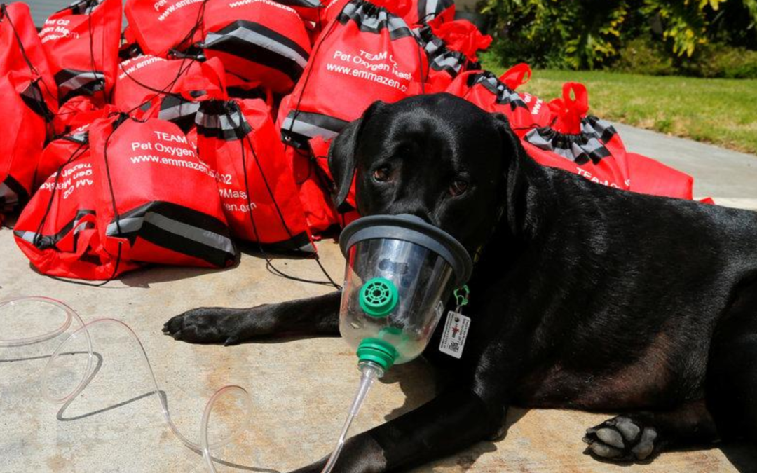 After Irma, special oxygen masks helped Florida pets breathe easier
