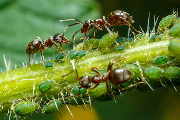 Keep your home ant free with these 5 all-natural ant repellents