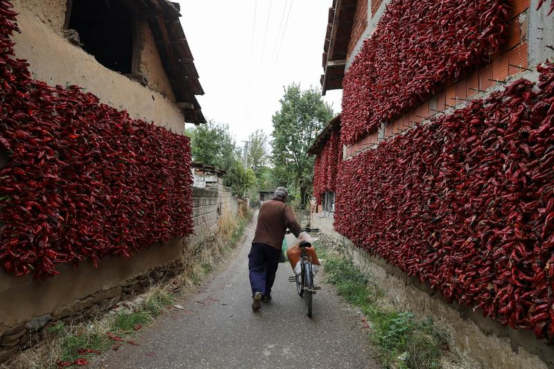 Hot and sweet and red all over, Serbian village hangs peppers out to dry