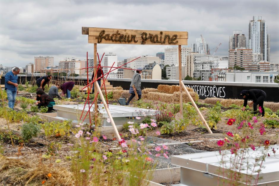 """Post office workers grow vegetables, breed chickens on Paris rooftop """"farm"""""""