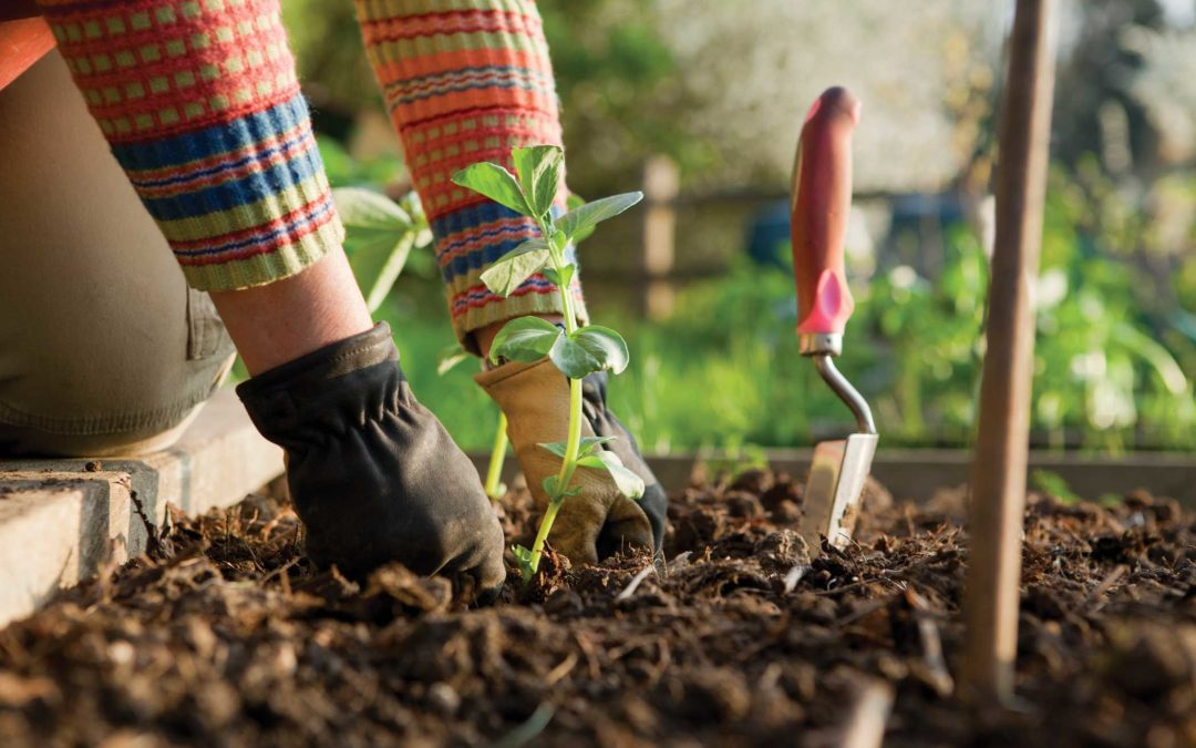 Henderson Partners with Developer, Nonprofit and Community to Build an Outdoor Garden Classroom