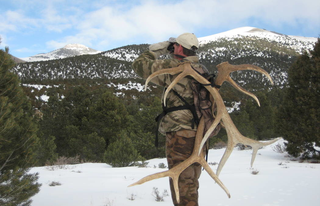 Nevada wildlife officials to mull regulating antler collecting
