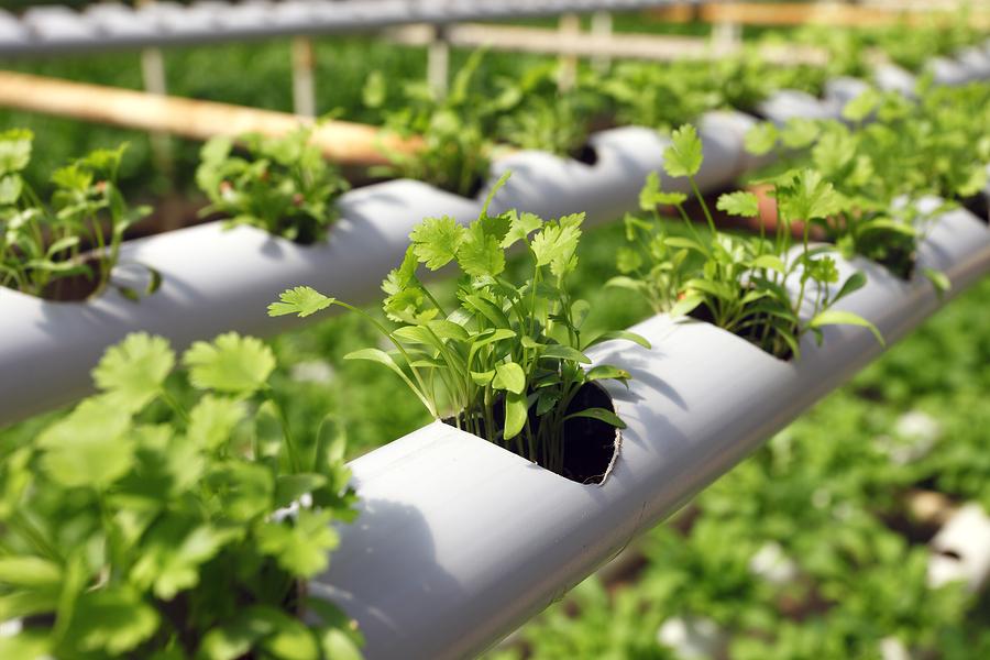 Organic Industry in Turmoil: Pioneering Farmers Threatening to Jump Ship