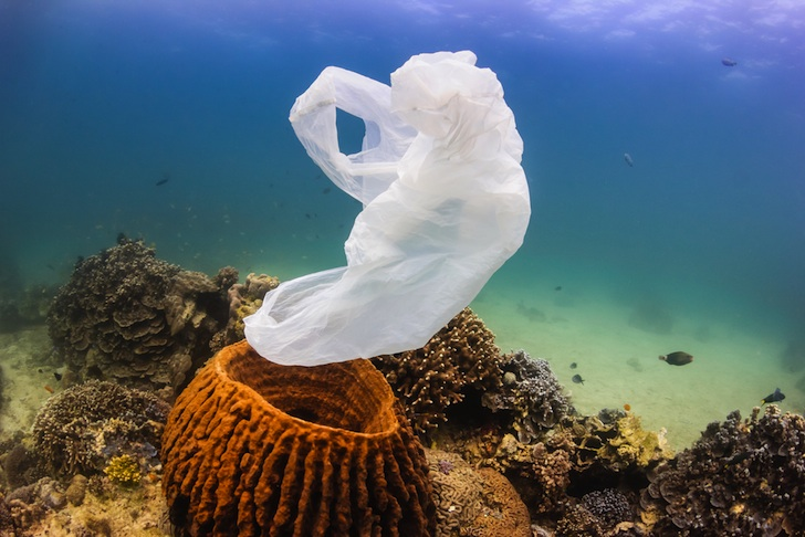 Our oceans are so polluted that the coral are now eating plastic, new study finds