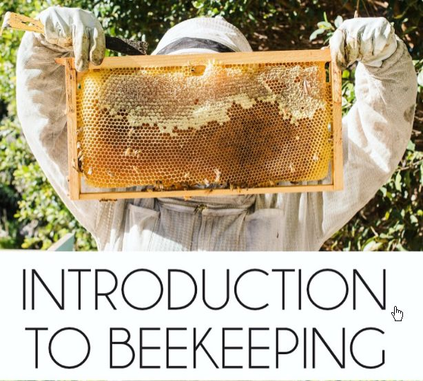 Bee Keeping Course Scheduled For Bearden-Harmony Grove Communities