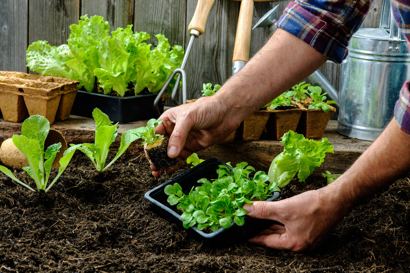 Home produce garden - It S Easier Than You Think How To Grow A Vegetable Garden