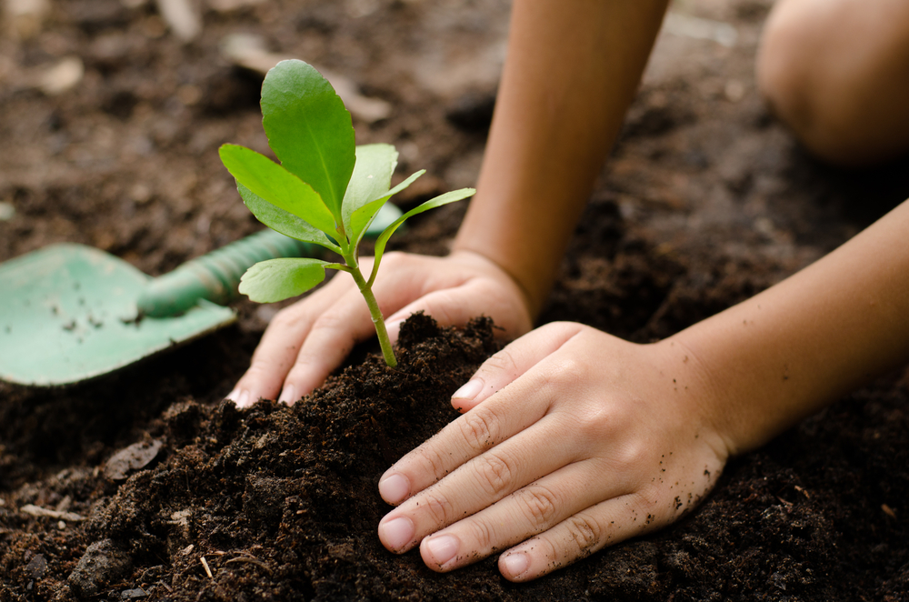 Your path towards Food Freedom: Simple and cheap home gardening innovations